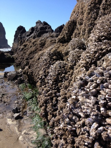 Mussels and barnacles are rampant along the rocks.