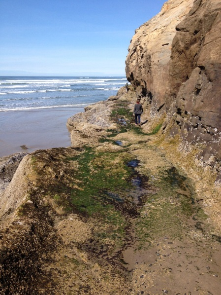 Before Highway 101, this stone cart path was how buggies made their way along the coastline.