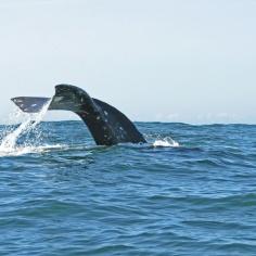 OCVA_whalewatching