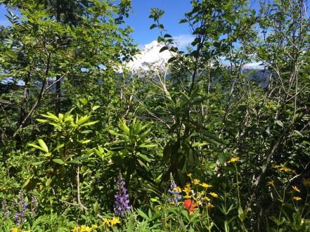 Mt. Hood from Mirror Lake
